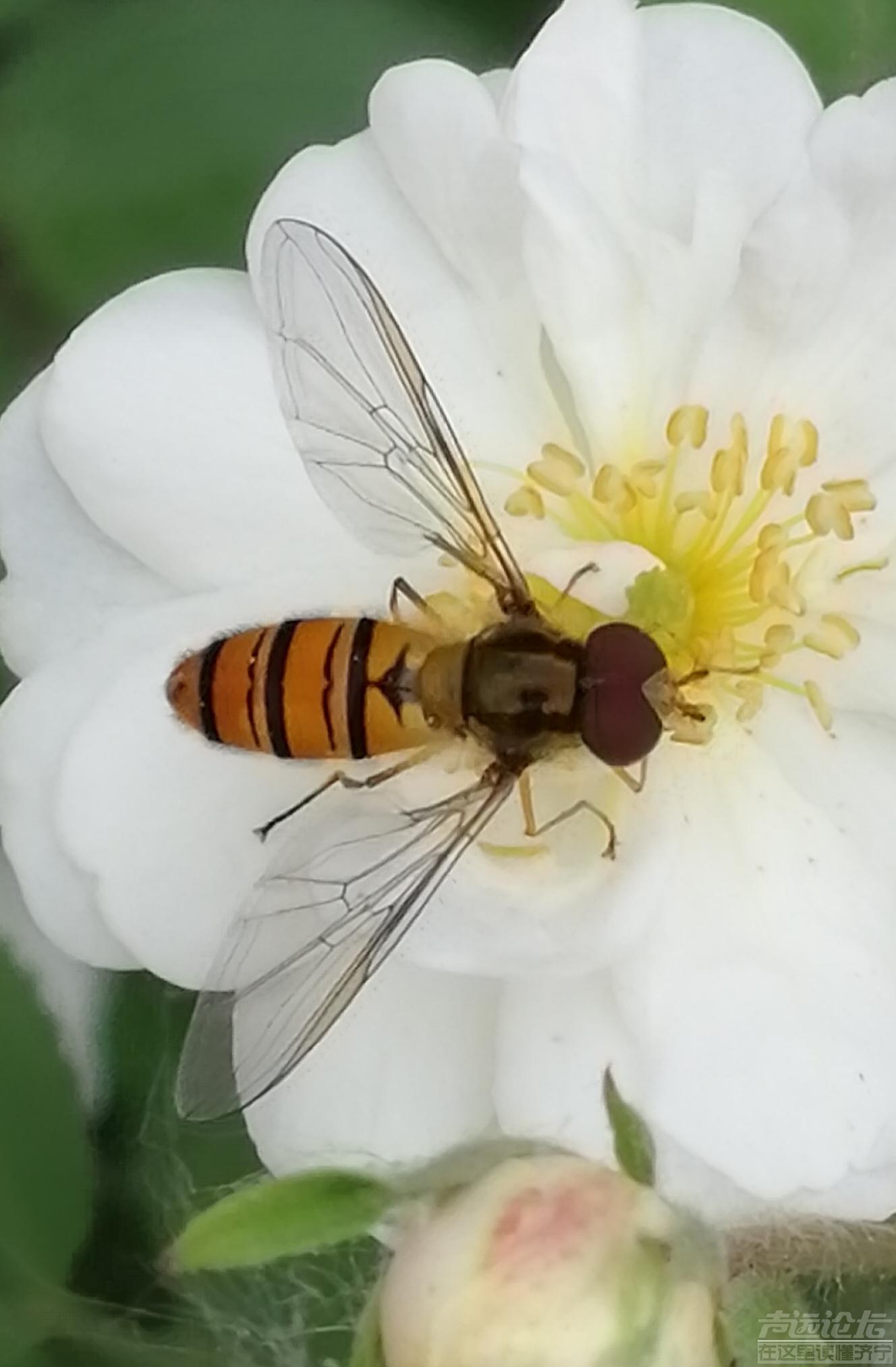 蜜蜂6.jpg