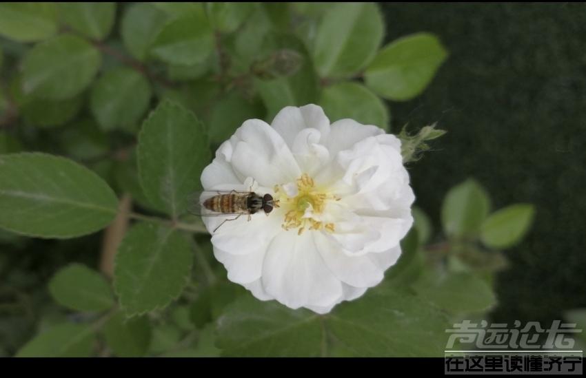 蜜蜂3.jpg