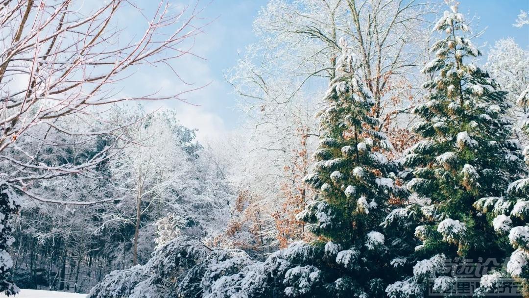 14 林海雪原.webp.jpg