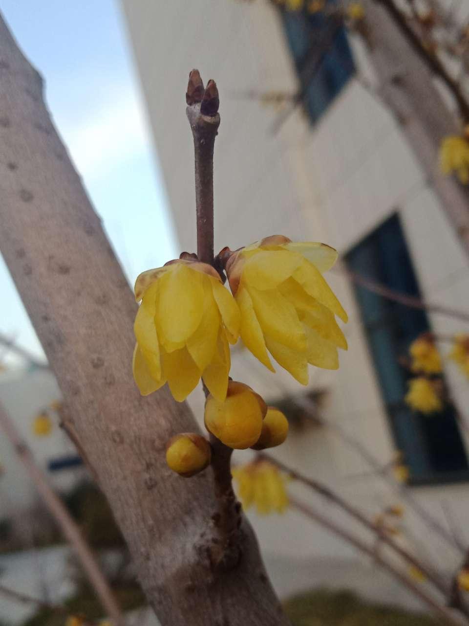 花已落,叶来了,果来了-4.jpg