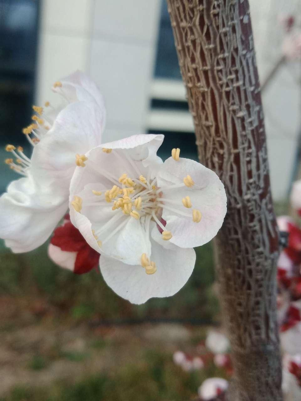 花已落,叶来了,果来了-23.jpg