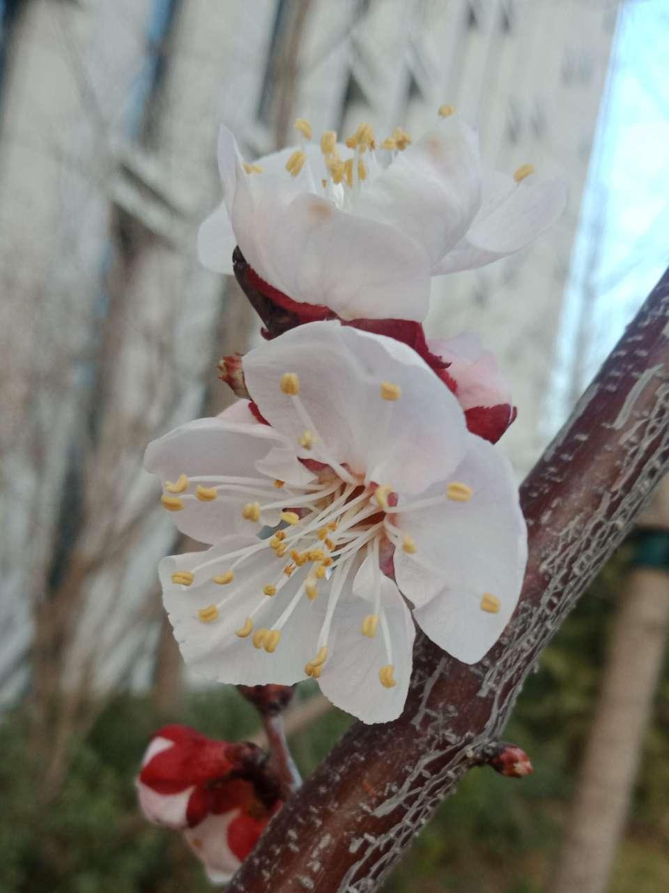花已落,叶来了,果来了-27.jpg
