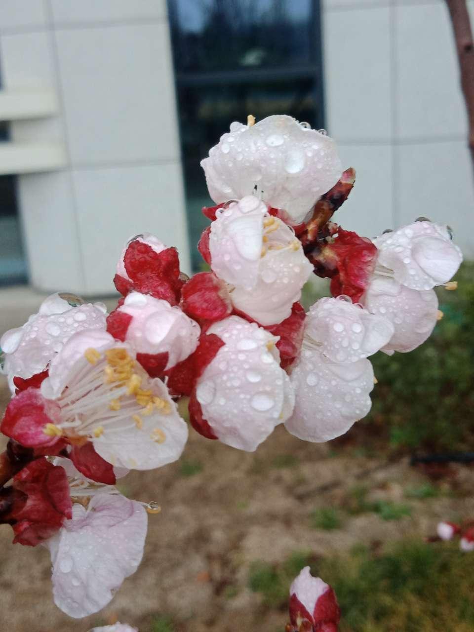 花已落,叶来了,果来了-28.jpg