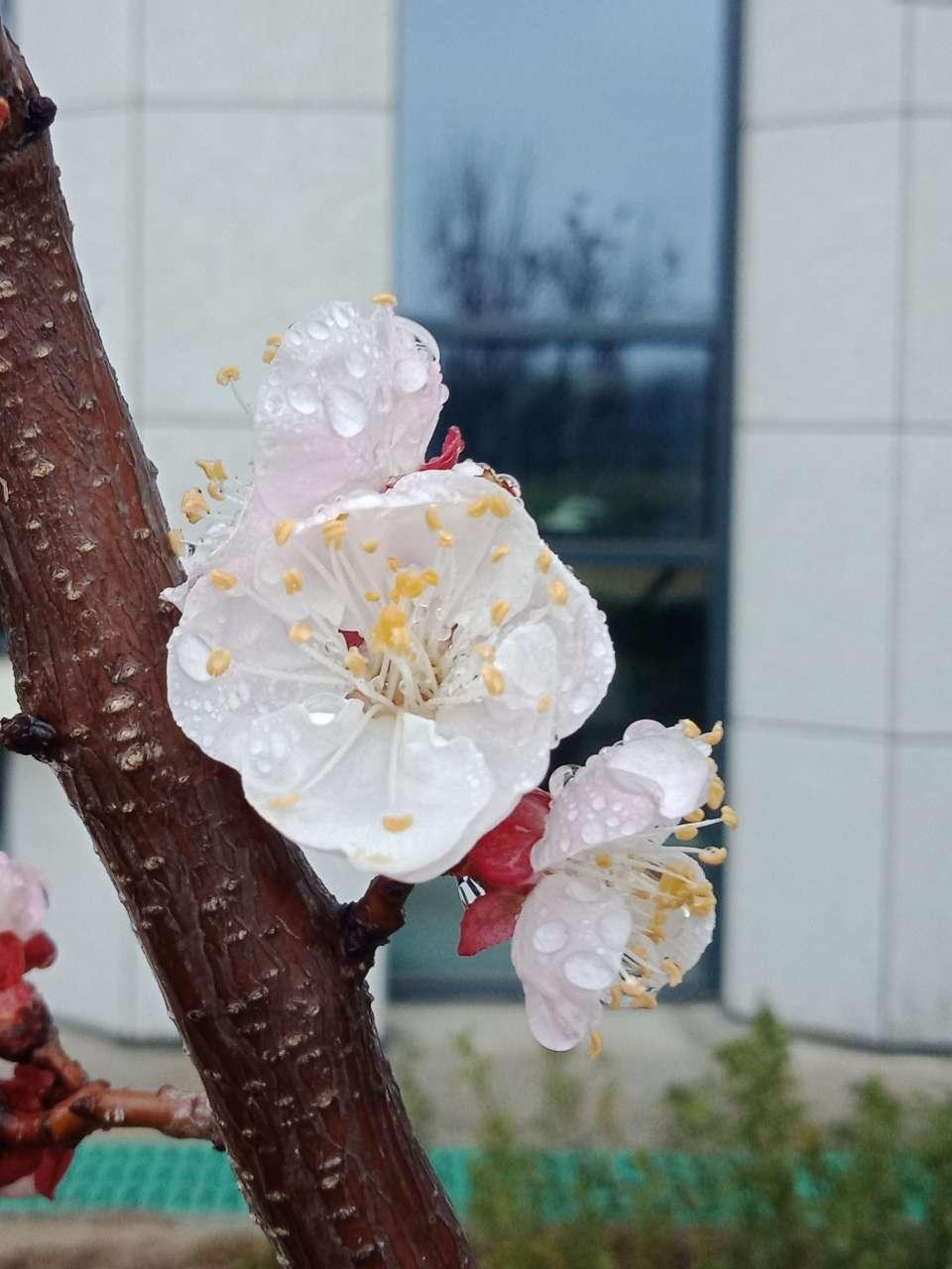 花已落,叶来了,果来了-29.jpg