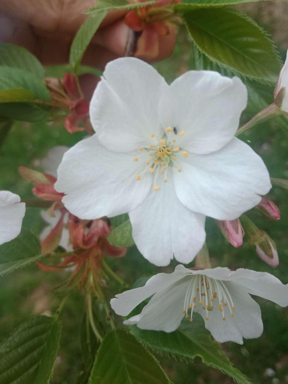 狼毒花,荠菜花,紫荆花,春天处处都好看-3.jpg