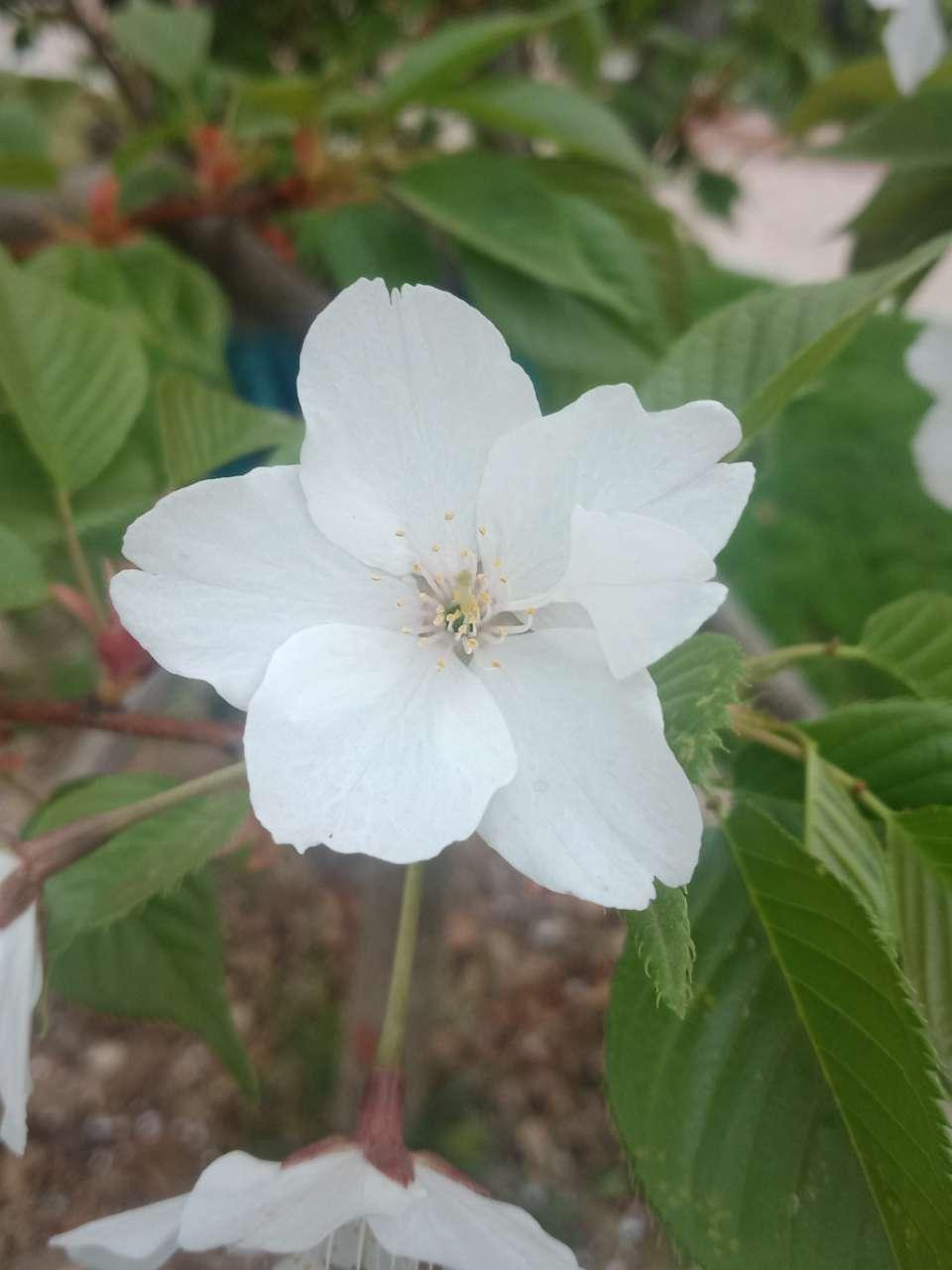 狼毒花,荠菜花,紫荆花,春天处处都好看-5.jpg