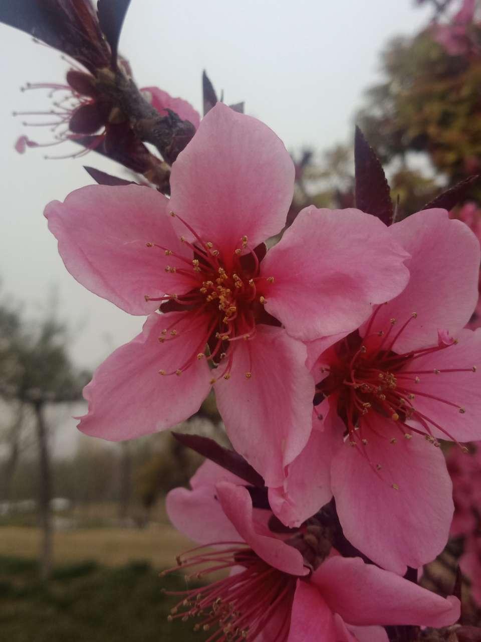 狼毒花,荠菜花,紫荆花,春天处处都好看-8.jpg