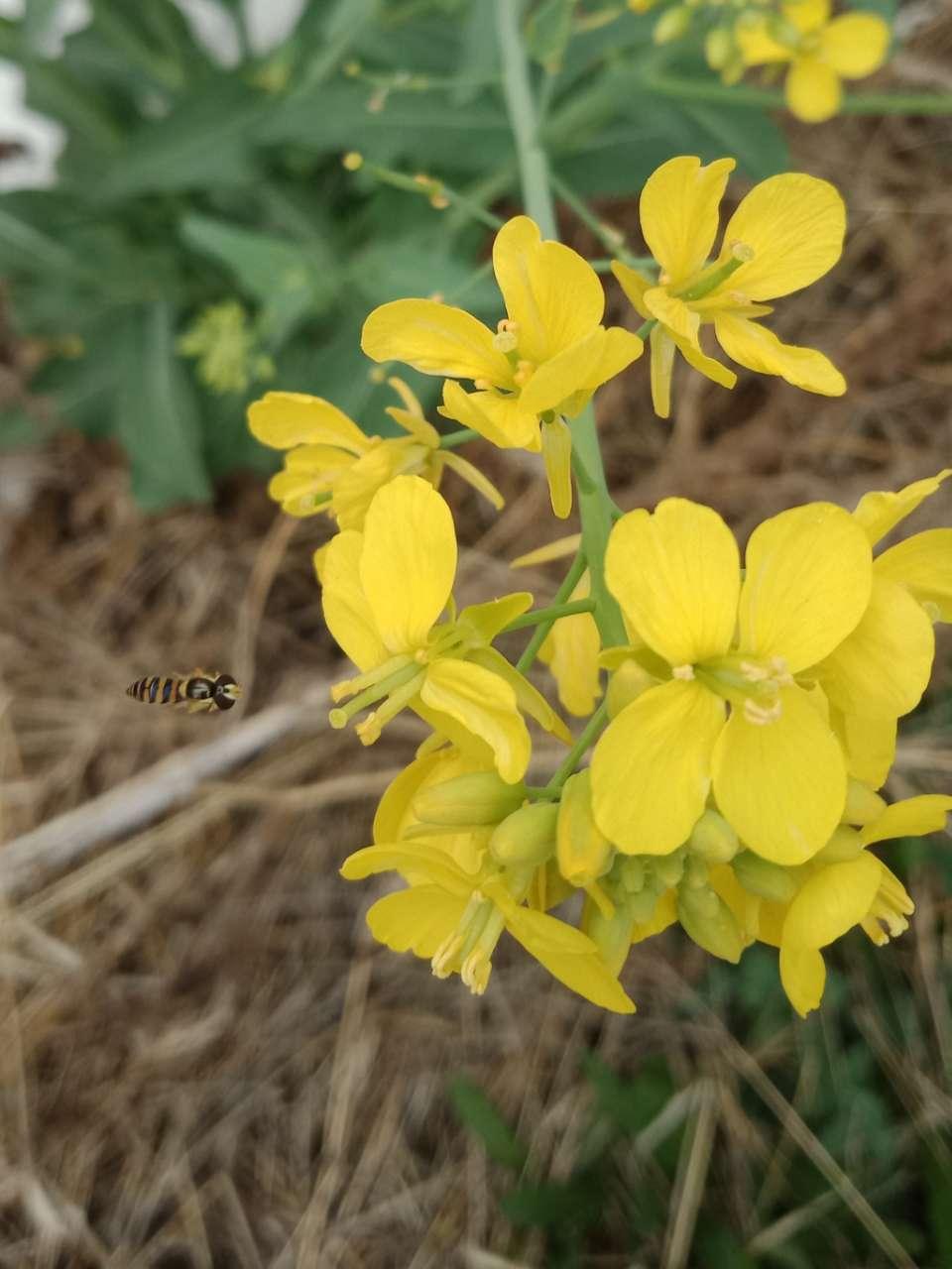 狼毒花,荠菜花,紫荆花,春天处处都好看-13.jpg