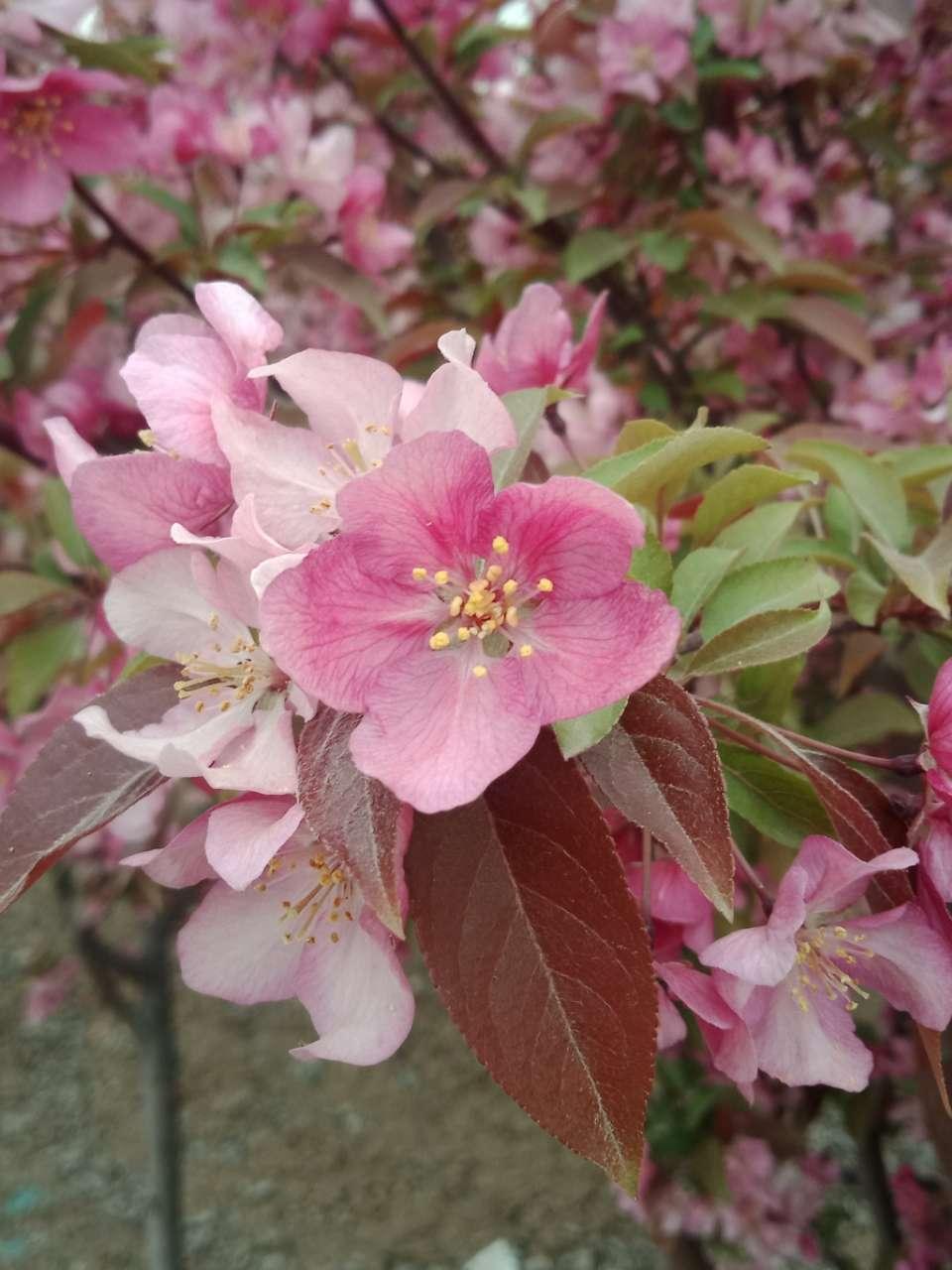 狼毒花,荠菜花,紫荆花,春天处处都好看-15.jpg