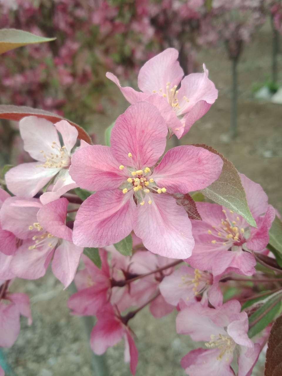 狼毒花,荠菜花,紫荆花,春天处处都好看-14.jpg