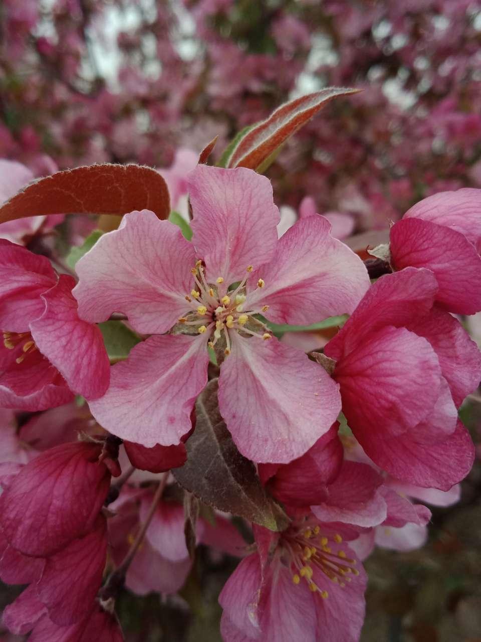 狼毒花,荠菜花,紫荆花,春天处处都好看-16.jpg