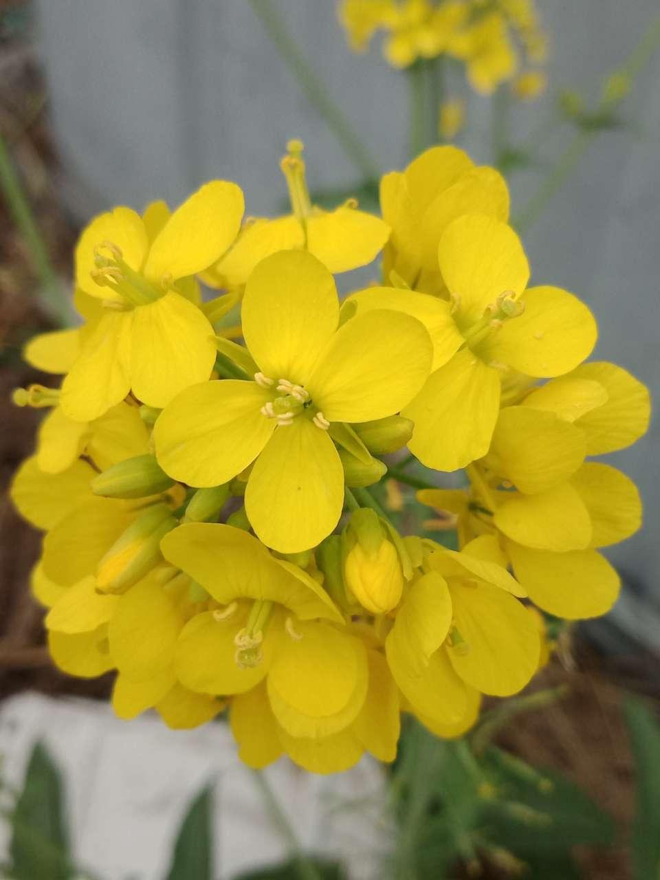 狼毒花,荠菜花,紫荆花,春天处处都好看-22.jpg