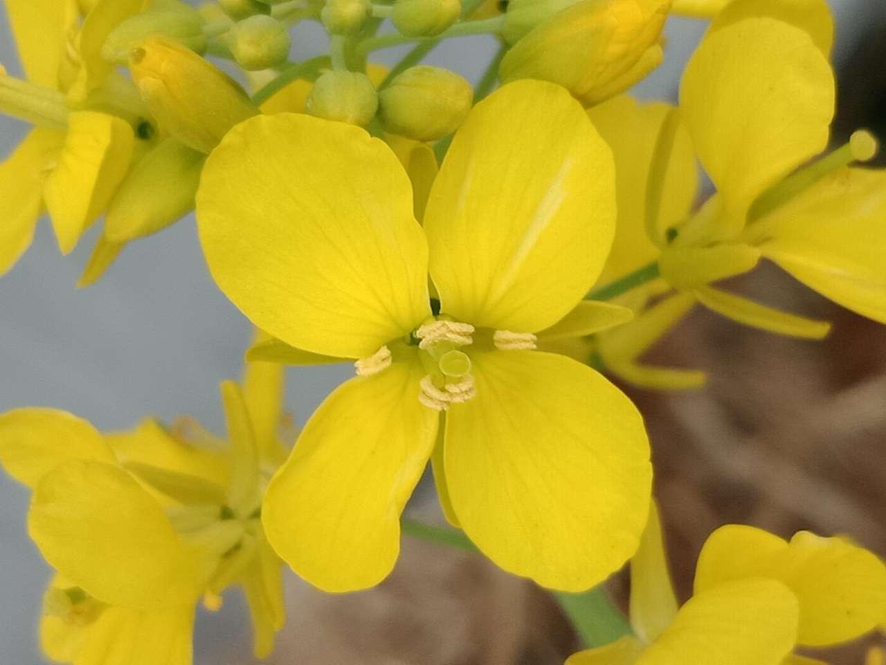 狼毒花,荠菜花,紫荆花,春天处处都好看-24.jpg