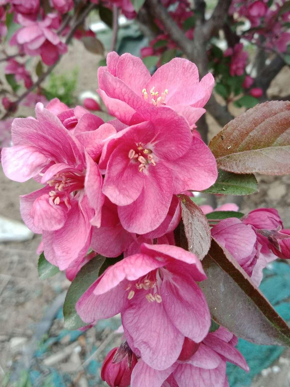 狼毒花,荠菜花,紫荆花,春天处处都好看-27.jpg