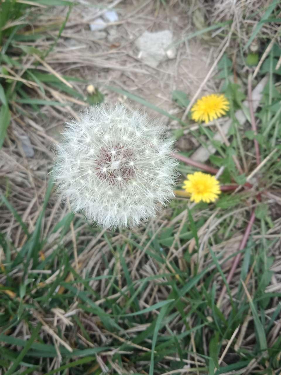 春天下午两三点钟,阳光下的月季花-6.jpg