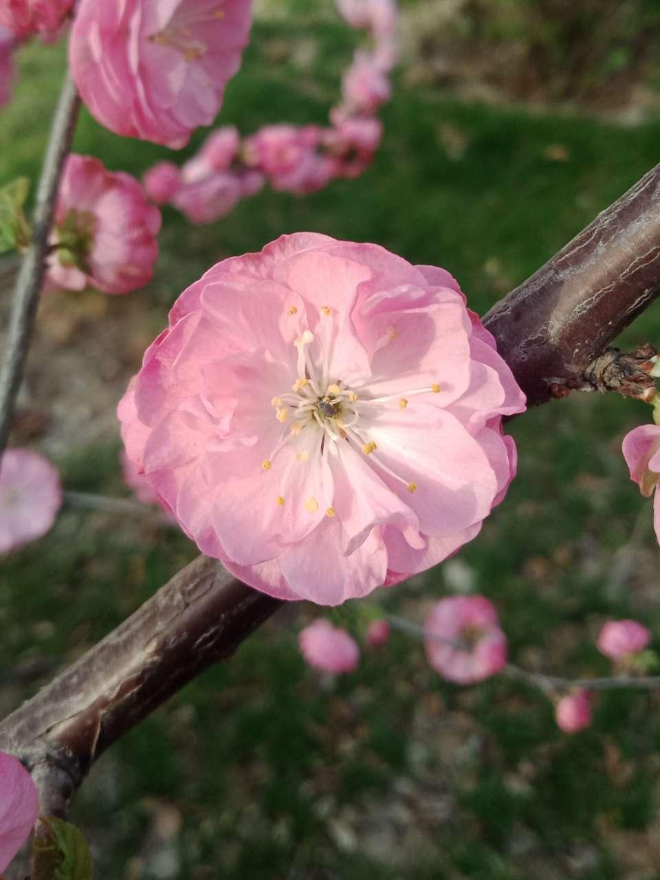 暗背景纯背景,亮花,占据画面突出位置,清晰,拍花的秘诀-8.jpg