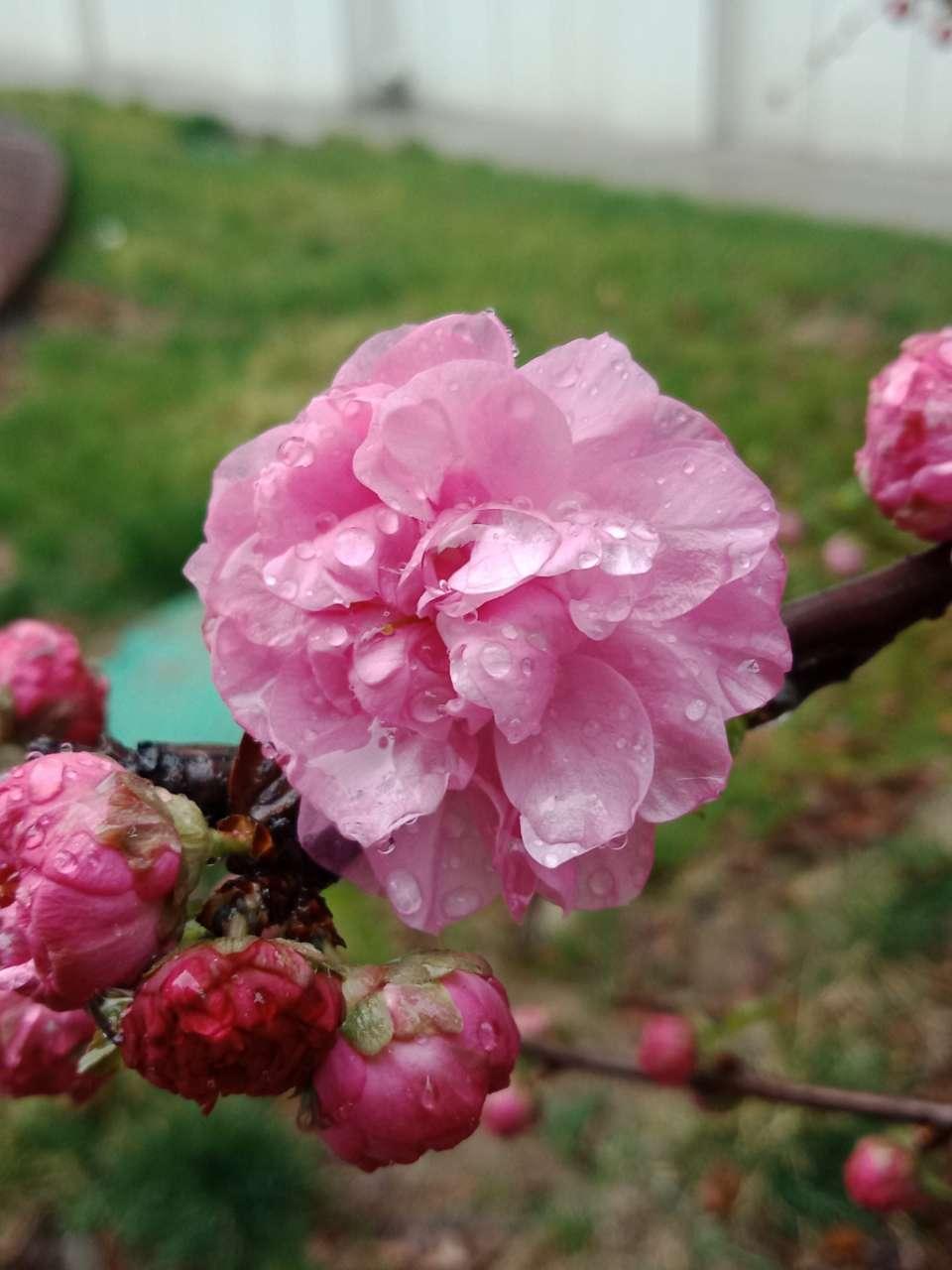 暗背景纯背景,亮花,占据画面突出位置,清晰,拍花的秘诀-12.jpg