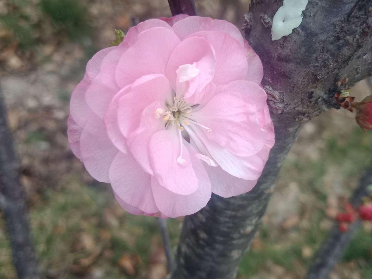 暗背景纯背景,亮花,占据画面突出位置,清晰,拍花的秘诀-29.jpg